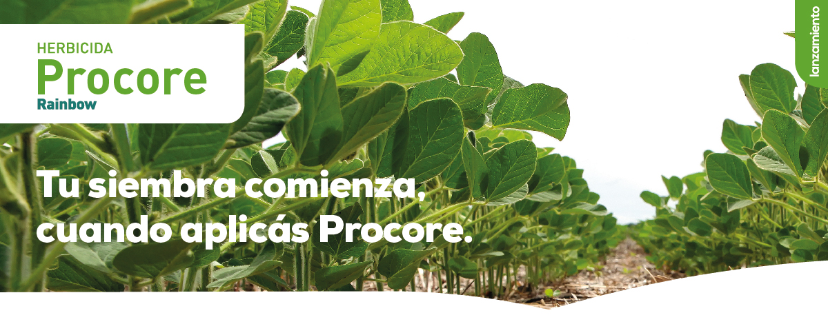Paraguay | Producto Procore